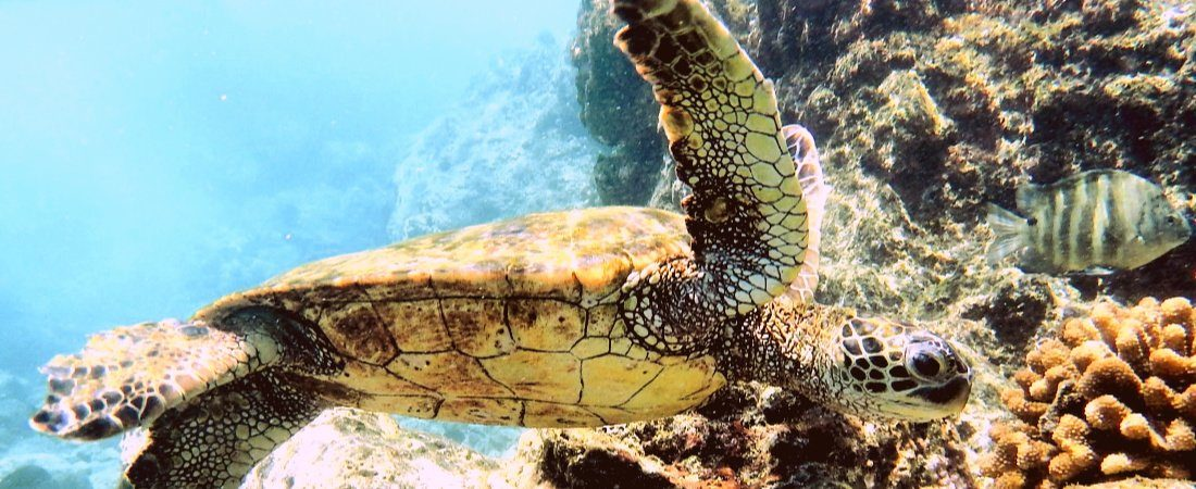 Snorkel with whales and turtles