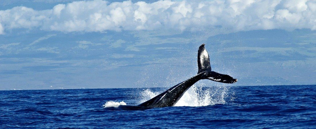 Best place to go whale watching